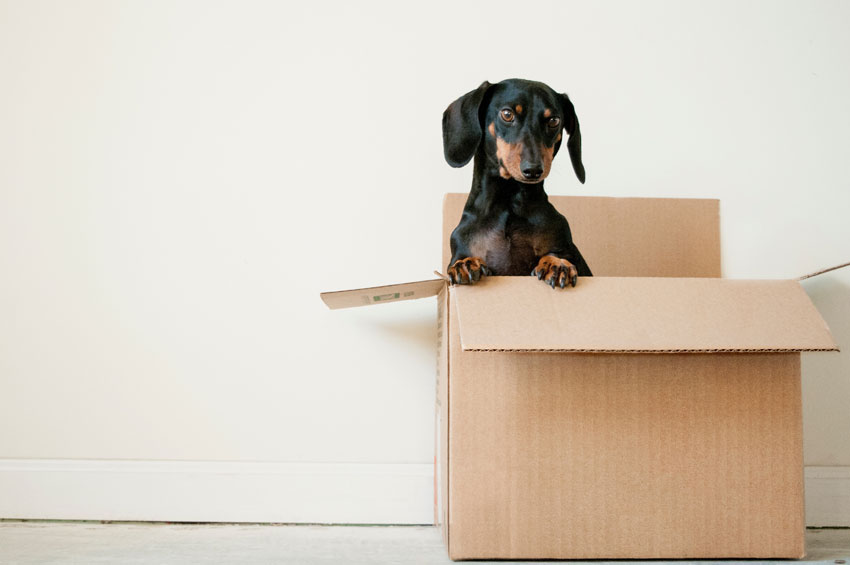 apartment moving tips - label boxes